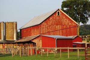 barns-and-horses