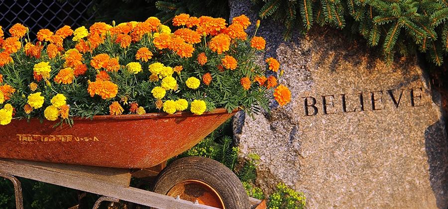 believe wheelbarrow